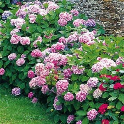 jardinerie vente arbres et arbustes p 233 pinieres dauphin 224