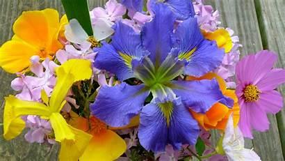 Spring Widescreen Desktop Flowers Computer Flower 1396