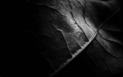 Dark Nature Veins Wallpapers Abstract Backgrounds Pixelstalk