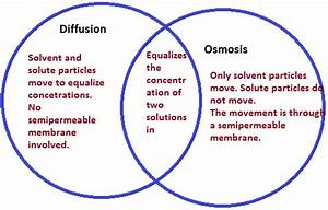 What U0026 39 S The Difference Between Diffusion And Osmosis