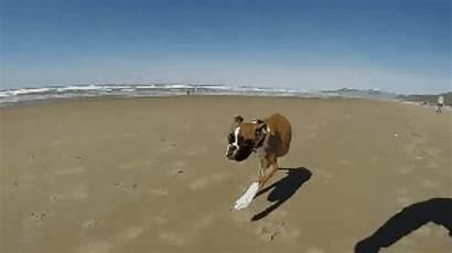 Beach Dog Enjoys Legged Arc Lou Duncan