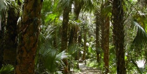 Oak Hammock Preserve by Hikes In St Florida Hikes