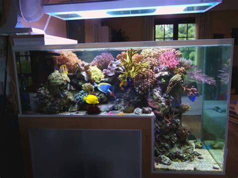 fish tank l l shaped aquarium aquariums aquarium
