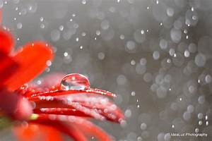 How to Shoot Artful Droplets on Flower Petals ...