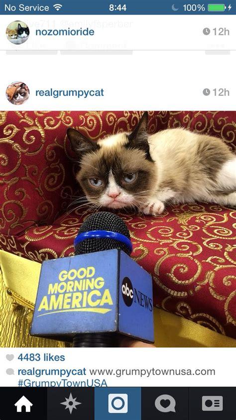Miserable Cat Meme - 17 best images about tard the grumpy cat