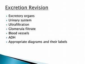 Labels Information List  35 Urinary System Label Quiz