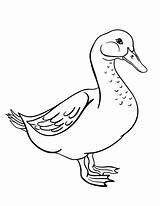 Goose Coloring Pages Printable Coloringcafe Farm Sheet Sheets Quilt Pdf Template Animal Animals Adult Printables Button Prints Standard Below Dog sketch template