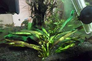 Two Years and Three Months of Cyanobacteria