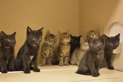 ten tiny kittens  tennessee   love  cats