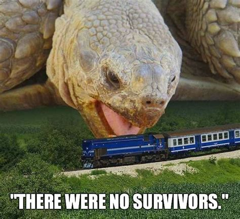 Tortoise Meme - 25 most funny tortoise pictures