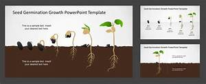 Seed Germination Growth Business Powerpoint Timeline