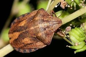 Was Ist Das Für Ein Baum : was ist das f r ein baum insekt allmystery ~ Watch28wear.com Haus und Dekorationen