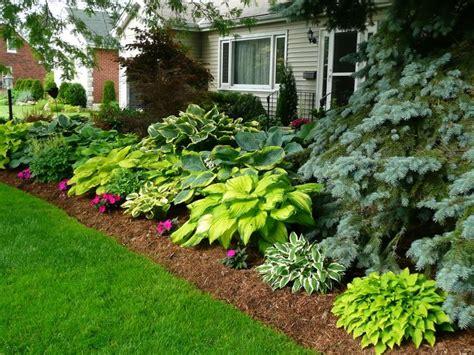 hosta landscaping ideas hostas in front of house google search shade garden woods edge pinterest gardens posts