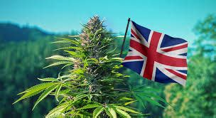 You can expect the following tweaks as of january 1, 2020 LondonWeed.Net - Top London & UK & Ireland & Scotland & Wales Weed From Spain to your Home Fast ...