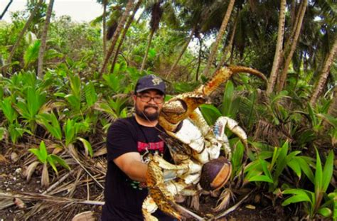 fearless christmas island native holds  giant coconut