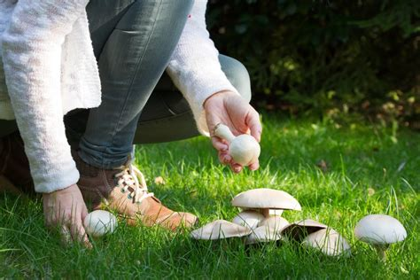 Pilze Im Garten Ernten by Pilze Selbst Anbauen Anleitung Und Tipps F 252 R Die Pilzzucht