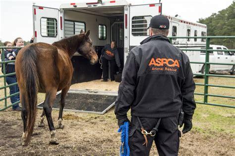 breaking news aspca assists  seizure   animals