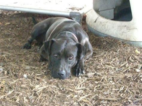 texas animals  rescueadoption images