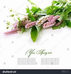 Bouquet Wild Flowers On White Background Stock Photo ...