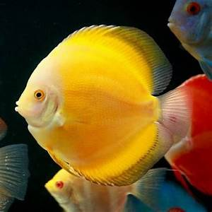 17 Best images about Fish on Pinterest   African cichlids ...