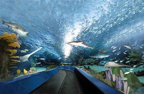 myrtle beach ripleys aquarium desktop backgrounds