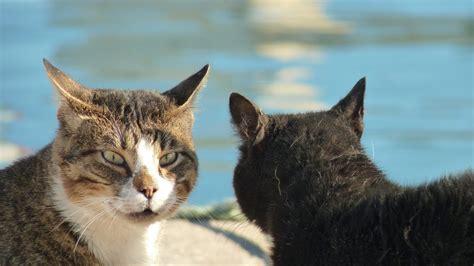 Bizertas ielu kaķi - treknuļi ar dievišķu izcelsmi. Jura ...