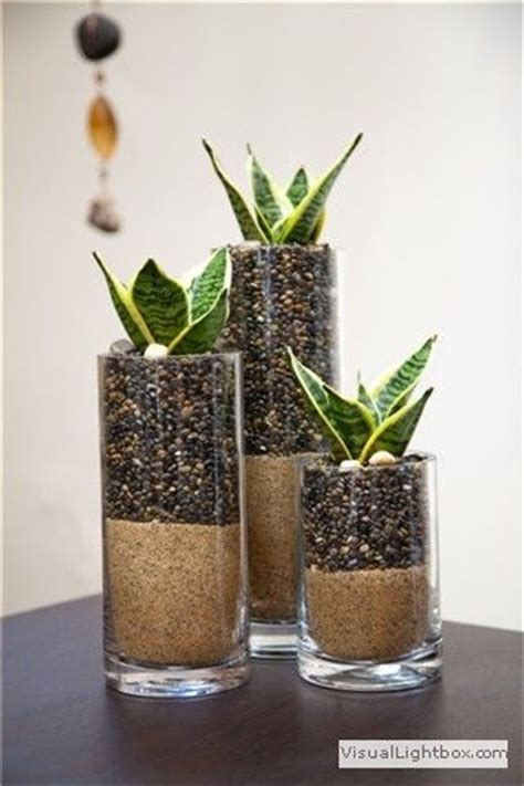 Plants For Bathrooms With No Light by Birds Glasses And Contemporary Tabletop On
