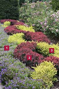 les 25 meilleures idees de la categorie erable pourpre du With idee de massif de jardin 3 mon jardin en automne suite