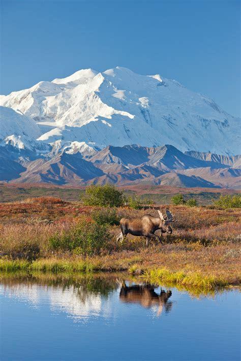 denali national park photography  hugh rose