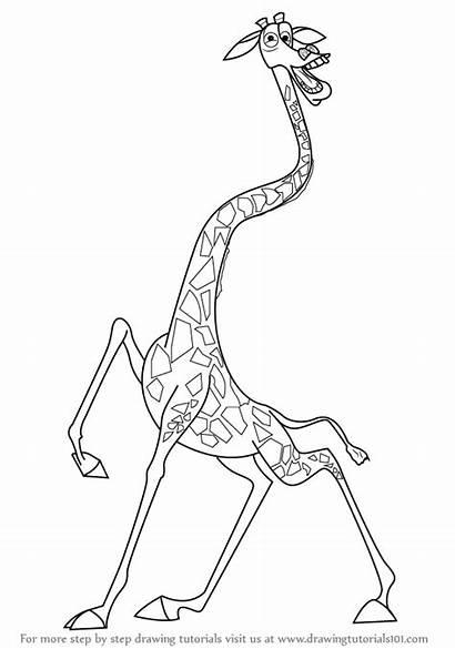 Giraffe Madagascar Draw Melman Drawing Step Outline
