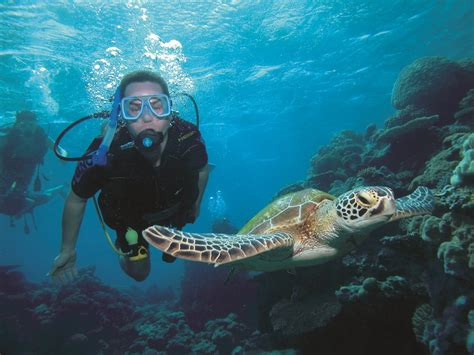 port douglas snorkel diving trips great barrier reef cruises with whales