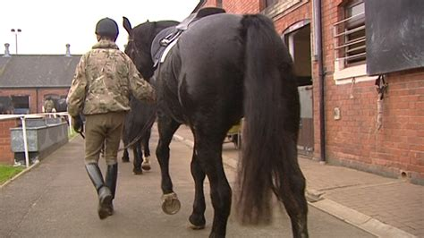 army horses injured   released  field