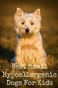 114 best images about small dogs on pinterest