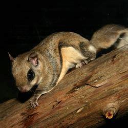 Squirrel Removal Services Anchorage Alaska Varmint Gone
