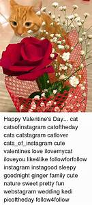 25+ Best Memes About Happy Valentines Day Cat | Happy ...