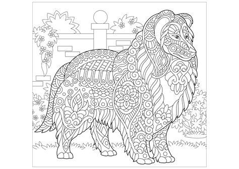 collie dog dogs adult coloring pages