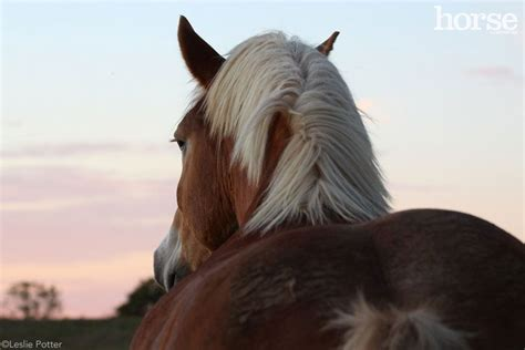 horse horses names draft horsechannel