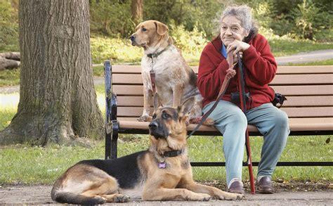 golden retrievers  golden years senior citizens  pets