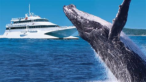 Tangalooma Whale Watch Cruises  Visit Brisbane