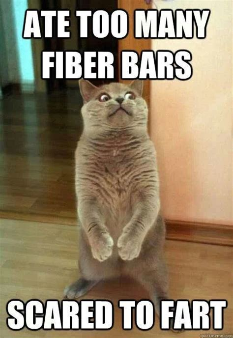 Cat Fart Meme - 78 images about the more you toot on pinterest jokes dog farts and smart car