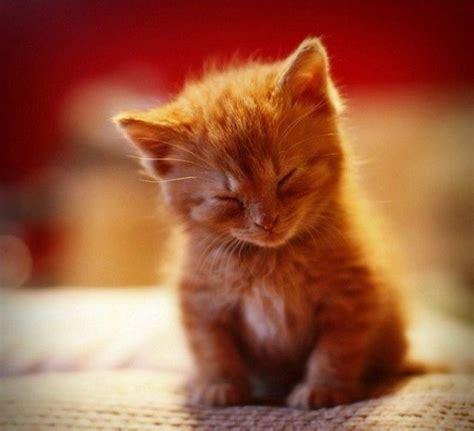 Fakti-Kaķi:) - Spoki