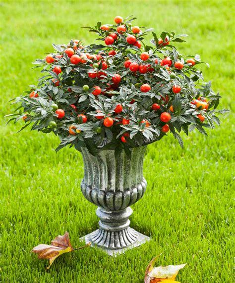 bureau de change pereire pommier d amour exterieur 28 images cultiv 233 plante