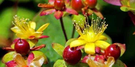 welche pflanzen gegen wespen pflanzen statt antibiotika teil 1