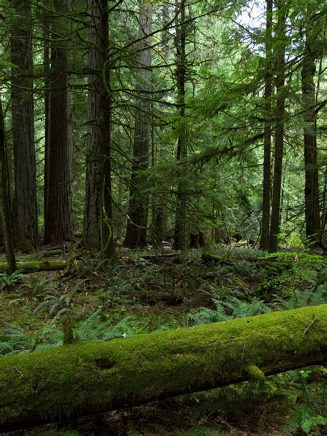 forest trees nature green  wallpaper forest green