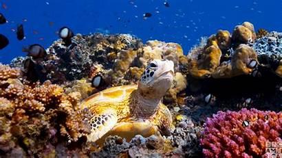 Sea Turtles Turtle Planet Gifs Bbc America