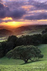 Oak Trees And Green Grass On Hills Over Valley At Sunset ...