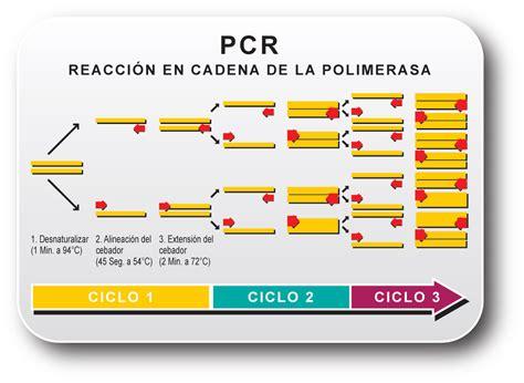 bureau de la pcr biologia molecular replicacion in vitro pcr