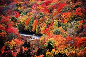 Weather, Channel, Fall, Foliage, Forecast, 2019