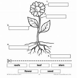 1 U00ba Eso Natural Sciences  Plants I  Plant And Flower Structure
