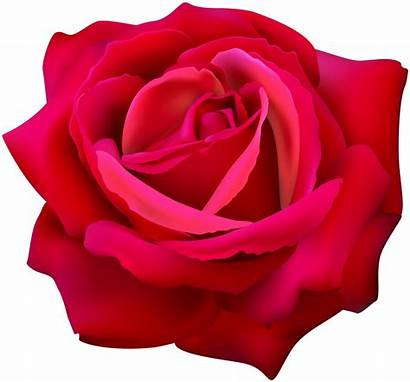 Rose Flower Clip Clipart Roses Transparent Flowers